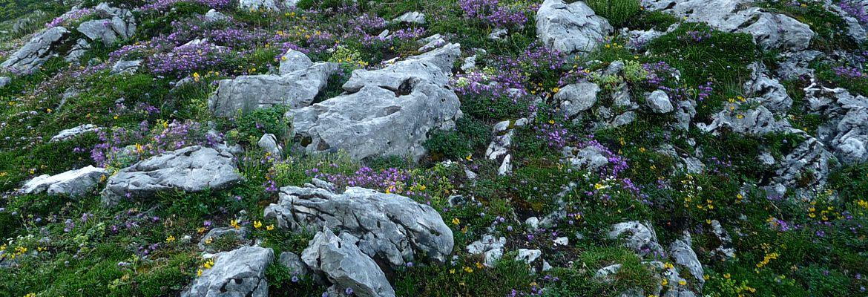 Bergblumen.jpg