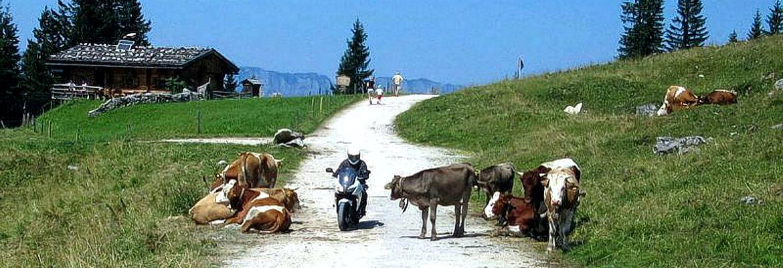 moped_kuehe.jpg