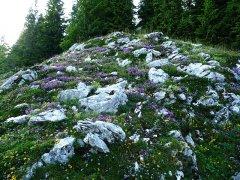 Bergblumen_006.jpg